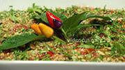 salat-yushnei_12